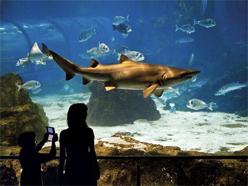 Foto akvária v Barceloně