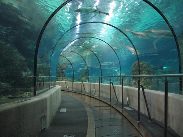 Akvárium v Barceloně